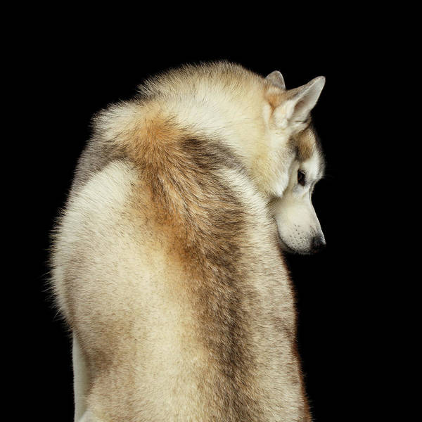 Wall Art - Photograph - Wolf In Soul by Sergey Taran