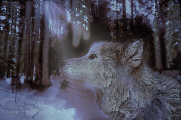 Painting - Wolf In The Woods - Painting by Ericamaxine Price