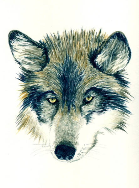 Wall Art - Painting - Wolf by Michael Vigliotti
