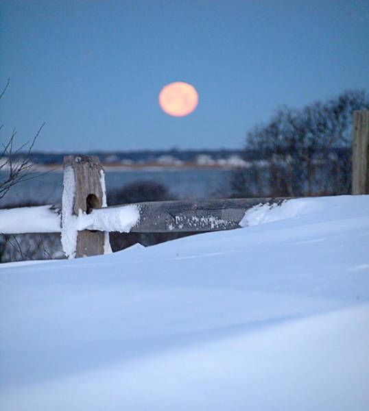 Photograph - Wolf Moon I I by  Newwwman