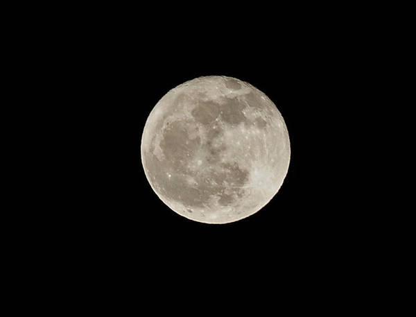 Photograph - Wolf Moon by Lara Ellis
