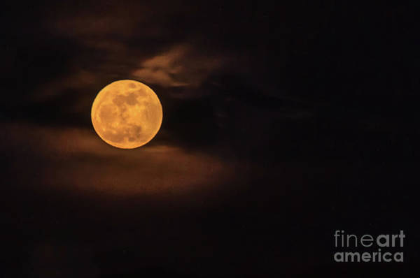 Howling Photograph - Wolf Moon by Robert Bales