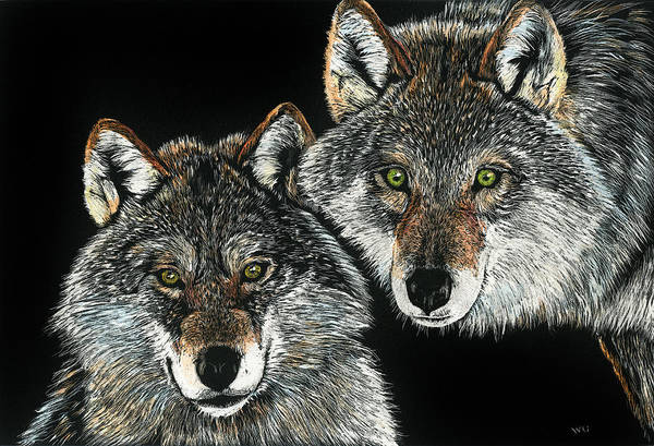 Drawing - Wolf Pair by William Underwood