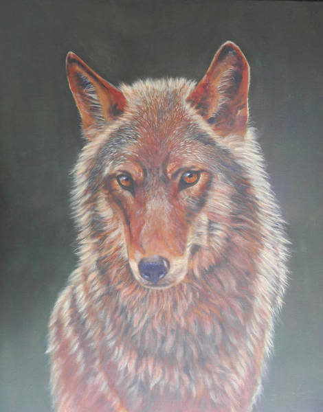 Painting - Wolf Portrait by John Neeve