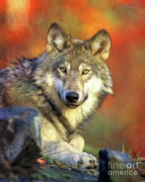 Wild Rabbit Painting - Wolf by Sarah Kirk