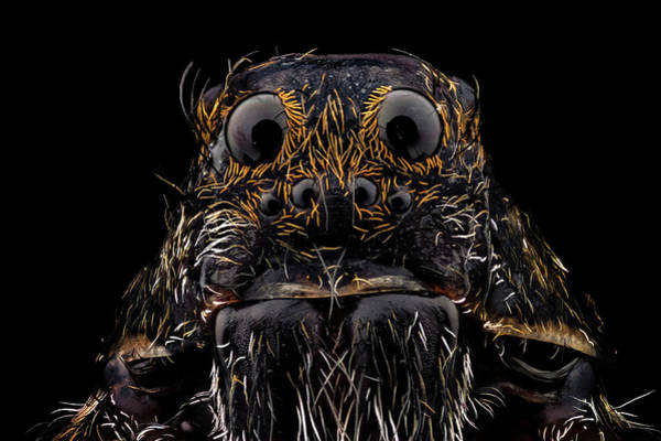 Wall Art - Photograph - Wolf Spider by Mihai Andritoiu