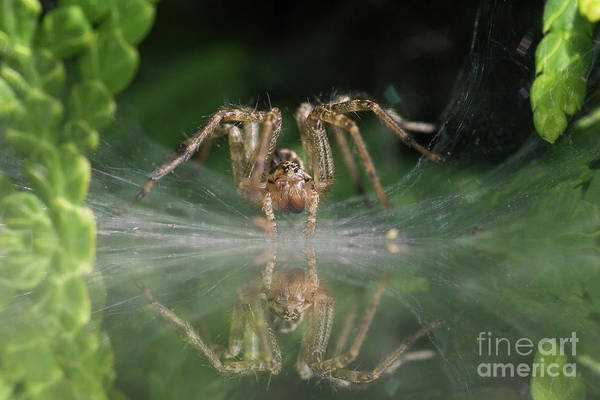 Wall Art - Photograph - Wolf Spider  by Mircea Costina Photography