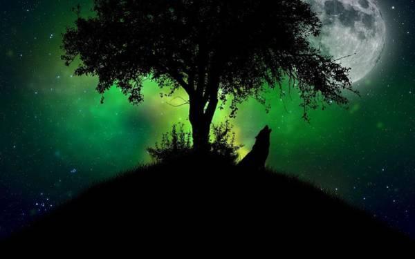 Night Digital Art - Wolf by Super Lovely