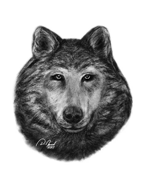 Furry Drawing - Wolf by Walter Israel