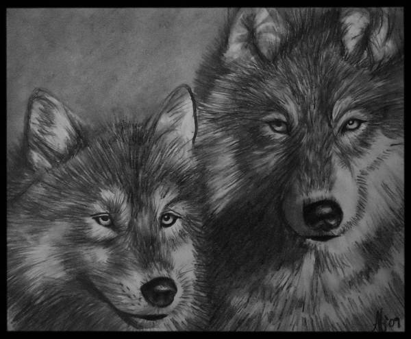 Wall Art - Drawing - Wolves by Alycia Ryan