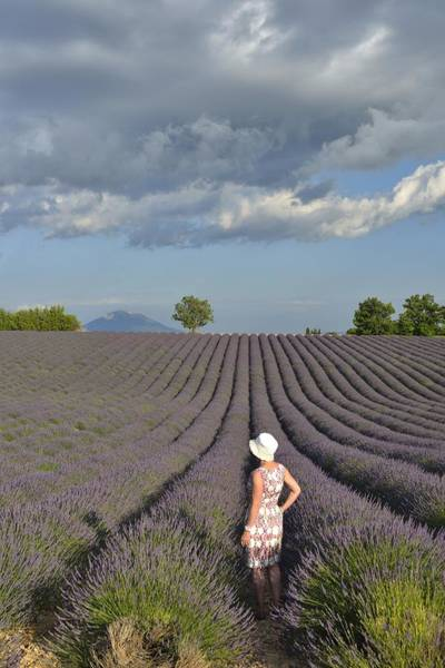 Wall Art - Photograph - Woman In The Lavender by Christian Heeb