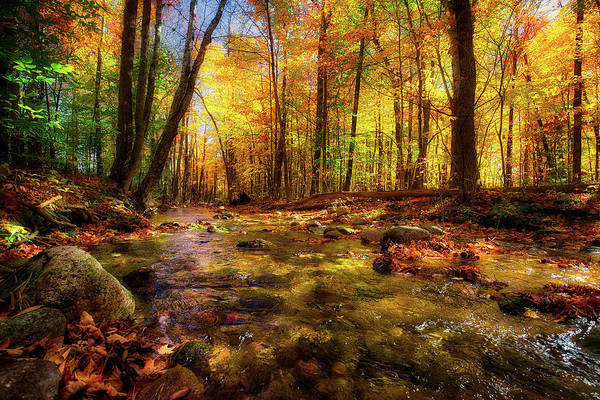Photograph - Wonalancet River by Robert Clifford