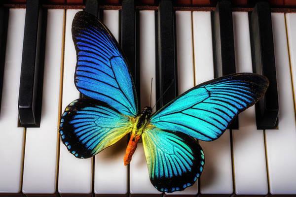 Wall Art - Photograph - Wonderful Blue Butterfly On Keys by Garry Gay