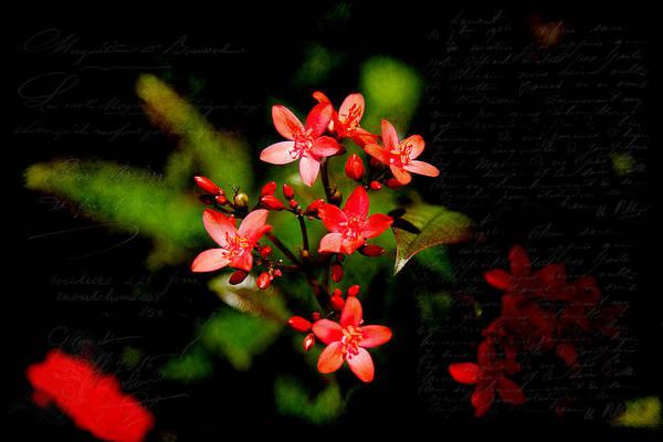 Photograph - Wonderful Colors by Milena Ilieva