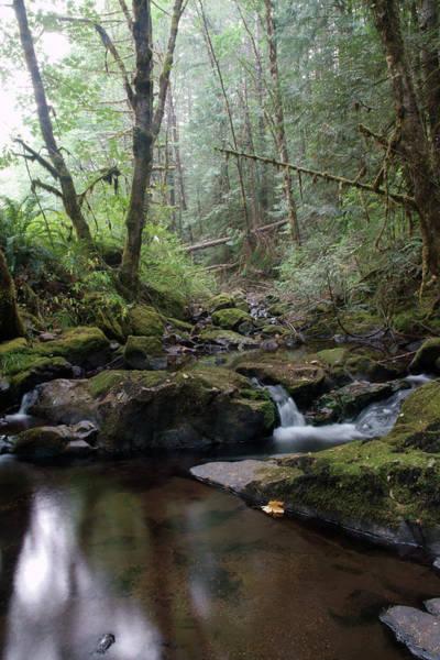 Photograph - Wonderful Wilson Creek by Ben Upham III