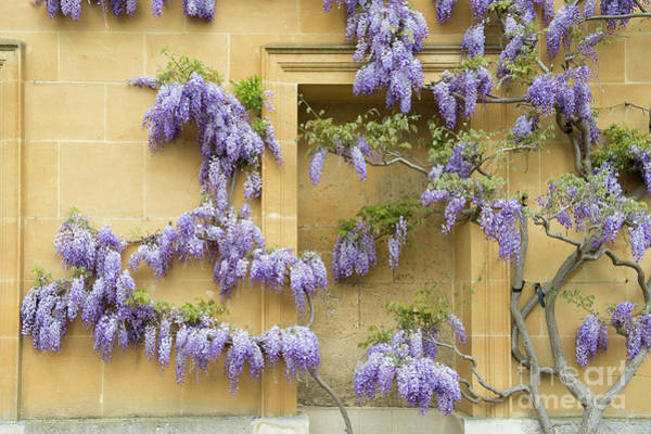 Wall Art - Photograph - Wonderful Wisteria by Tim Gainey