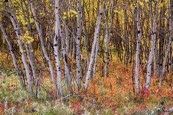 Photograph - Wonderful Woods Wonderland by James BO Insogna