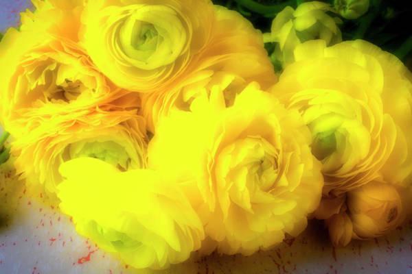 Ranunculus Photograph - Wonderful Yellow Ranunculus by Garry Gay