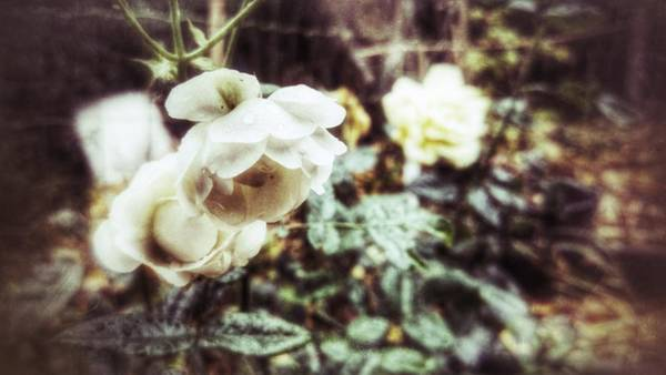 Photograph - Wonderland by Abbie Shores