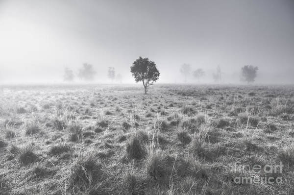 Purple Haze Photograph - Wondrous Misty Background by Jorgo Photography - Wall Art Gallery
