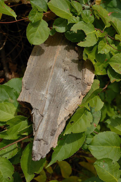 Photograph - Wood And Leaves by Frank Mari