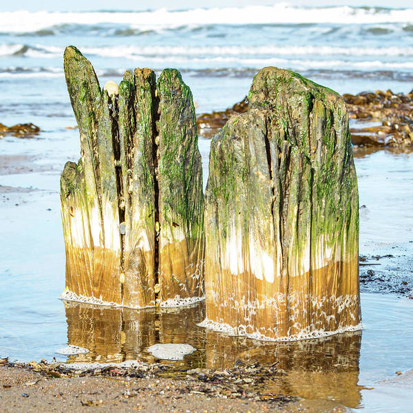 Photograph - Wood And Sea 01 by Robert Sidebottom