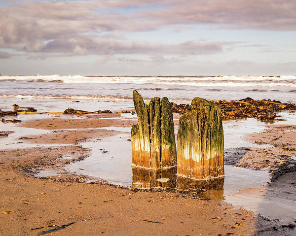 Photograph - Wood And Sea #2 by Robert Sidebottom