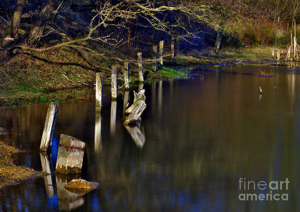 Photograph - Wood And Water by Martyn Arnold
