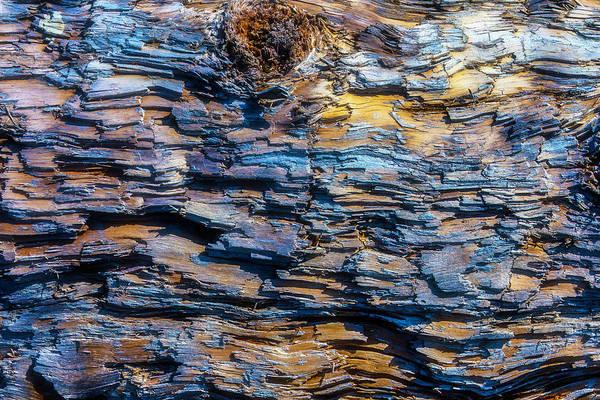 Wall Art - Photograph - Wood Bark Texture by Garry Gay
