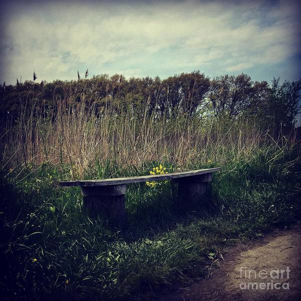 Photograph - Wood Bench And Yellow Flowers by Frank J Casella