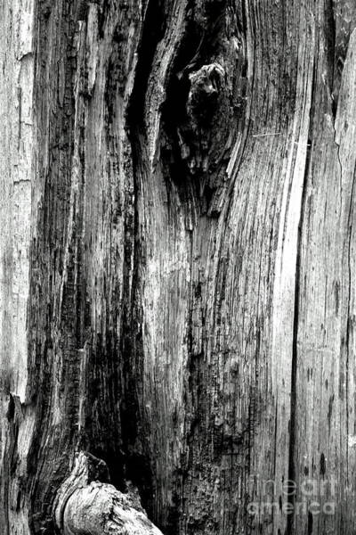 Photograph - Wood by Cara Jolivet