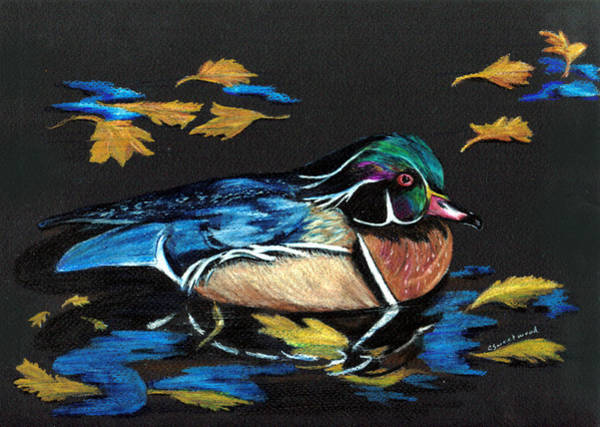 Teal Drawing - Wood Duck And Fall Leaves by Carol Sweetwood