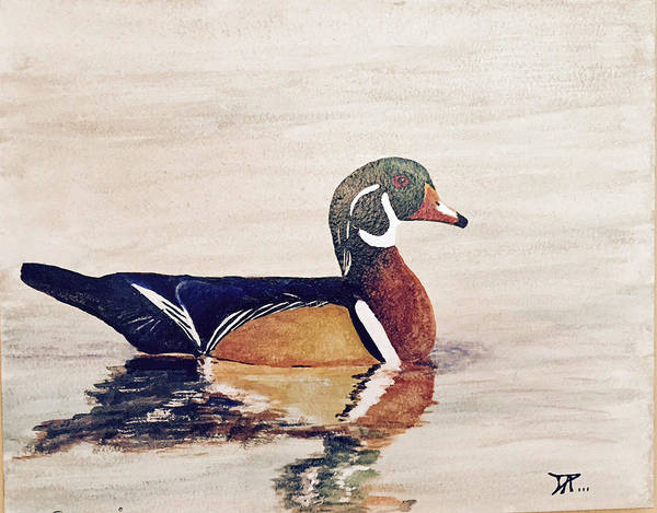 Painting - Wood Duck by Donald Paczynski