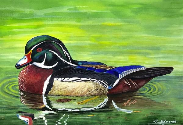 Waterfowl Wall Art - Painting - Wood Duck by Raymond Edmonds