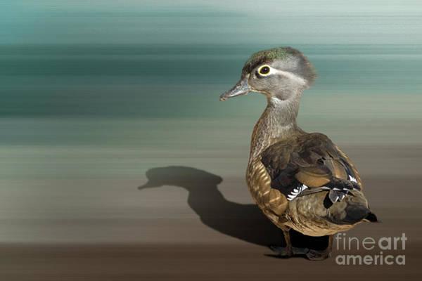 Photograph - Wood Duck by Susan Warren