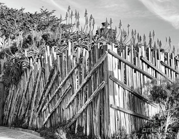 Carmel By The Sea Photograph - Wood Fence Flowers Black White  by Chuck Kuhn