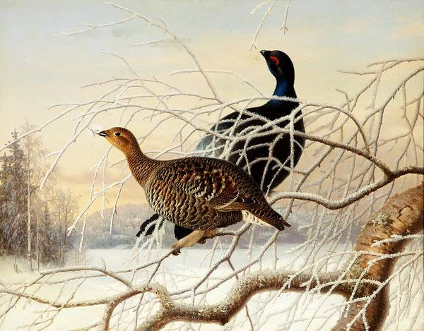 Painting - Wood Grouse Couple by Ferdinand von Wright