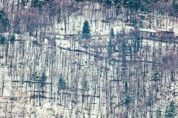 Photograph - Wood In Winter by Silvia Ganora