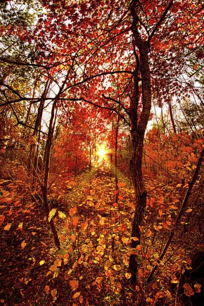 Photograph - Wood Light by Phil Koch