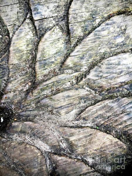Wall Art - Photograph - Wood Pattern by Tom Gowanlock