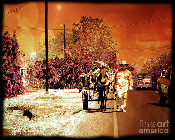 Wall Art - Photograph - Wood Recycler In The Dry Arc Of Panama by Al Bourassa