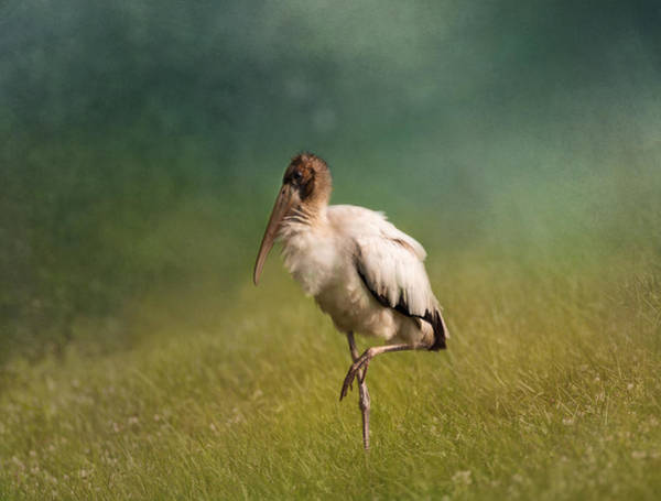 Wood Stork - Balancing Art Print