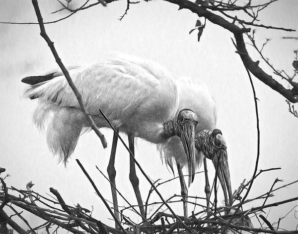 Photograph - Wood Stork Pair by Alice Gipson