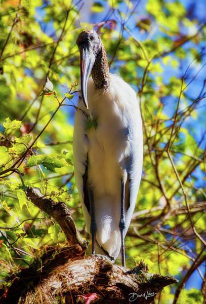 Photograph - Wood Stork Stare by David A Lane