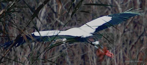 Marsh Bird Digital Art - Wood Stork Wing Span by DigiArt Diaries by Vicky B Fuller