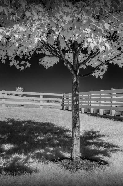 Photograph - Wood White Fence With Tree In Infrared At The Country Dairy Farm Store by Randall Nyhof