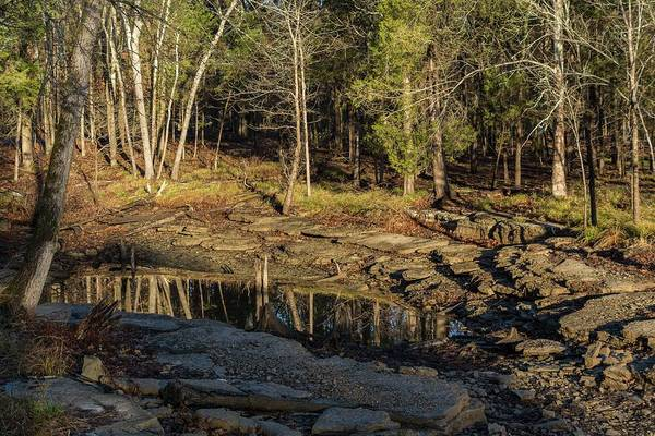 Photograph - Wooded Backwash by John Benedict