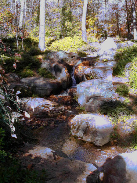 Photograph - Wooded Blue Brook by Anne Cameron Cutri