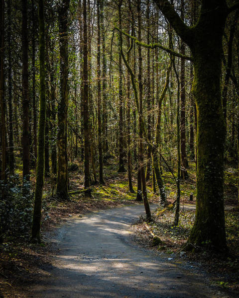 Photograph - Wooded Path At Coole Park by James Truett