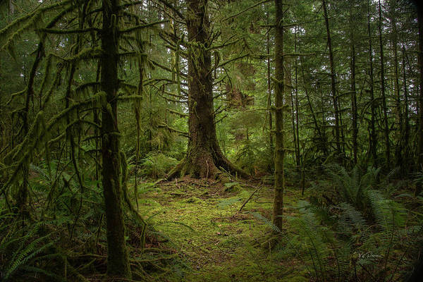 Photograph - Wooded Sentinel by Bill Posner